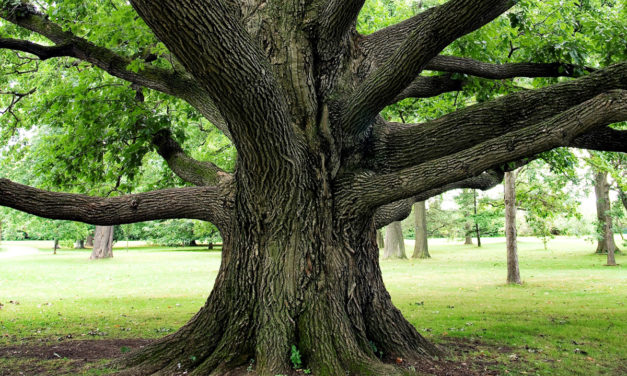 TU B'SHEVAT—Trees Enhance Our Lives